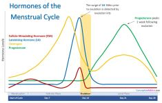 Hormones of the Menstrual Cycle Small